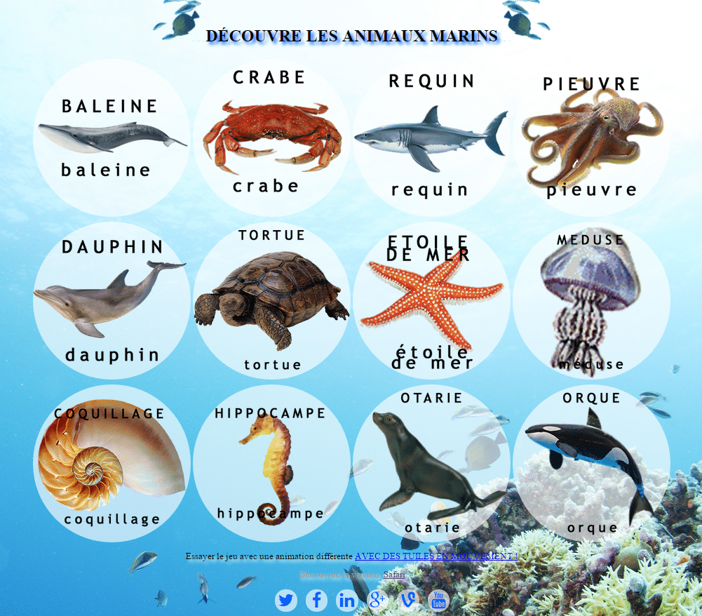 Découvre les animaux marins